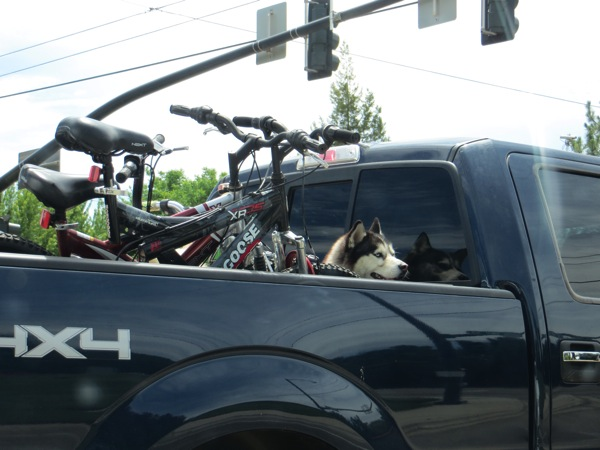 Dog in a truck
