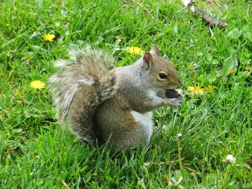 Cute squirel